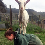 Animal Science internships in New Zealand