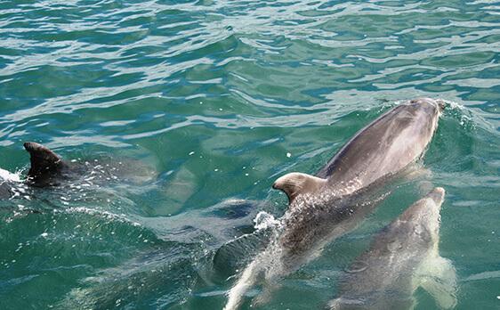 Dolphins bay of island trip