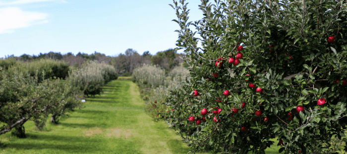 Orchard Farming work experience in New Zealand